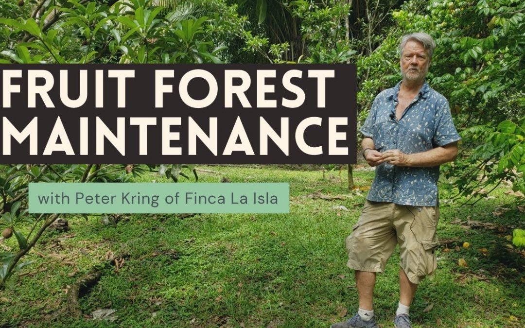 Fruit Forest Maintenance (Peter Kring: Finca La Isla)