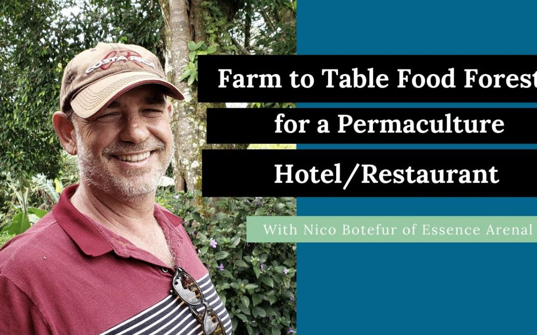 Farm to Table Food Forests Feeding a Permaculture Hotel/Restaurant (Nico Botefur: Essence Arenal)